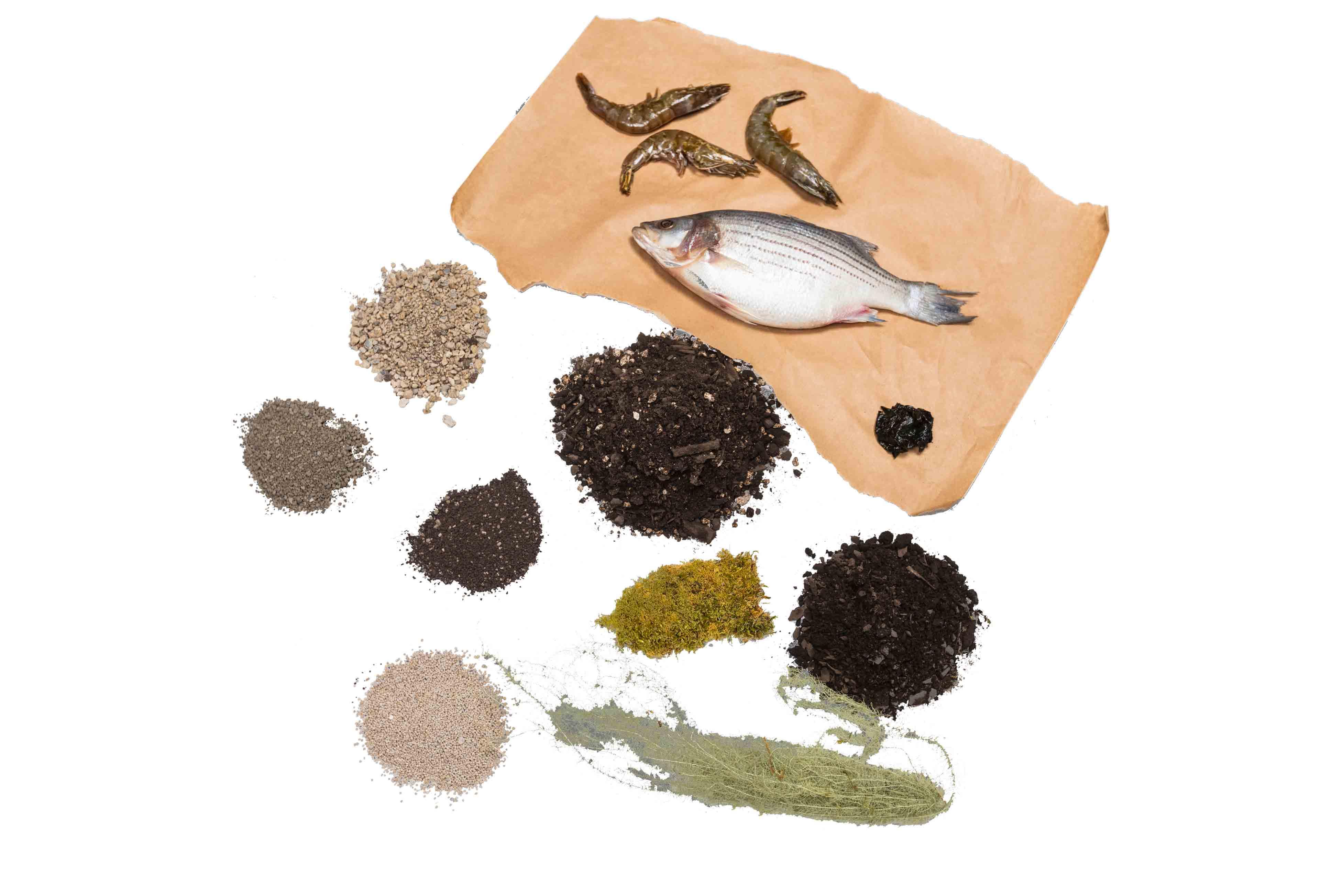 Forest Floor Organic Soils
