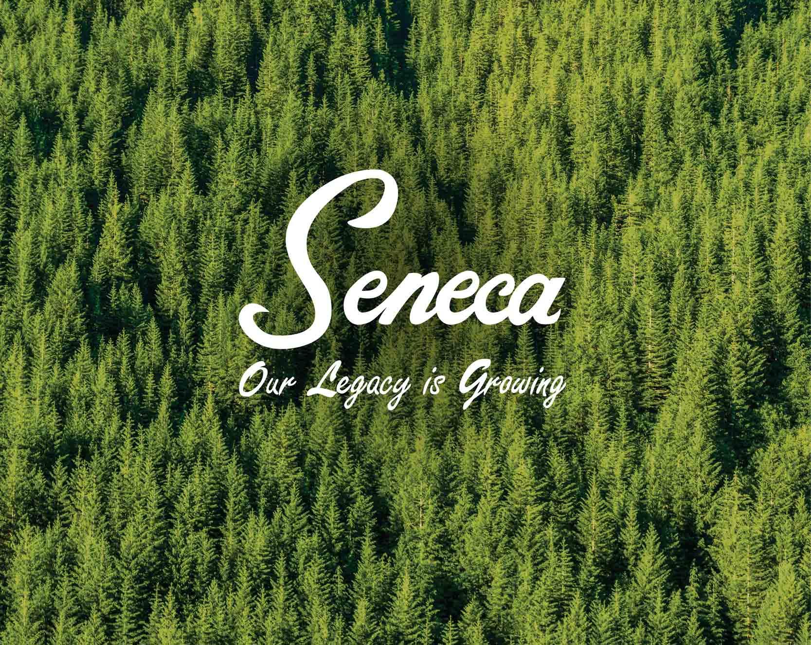 Case Study: Seneca Sawmill Virtual Reality